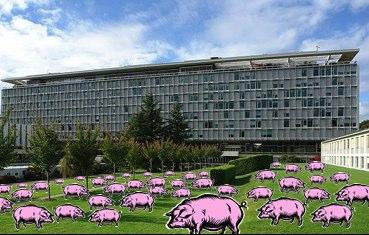 978_pig herd_who